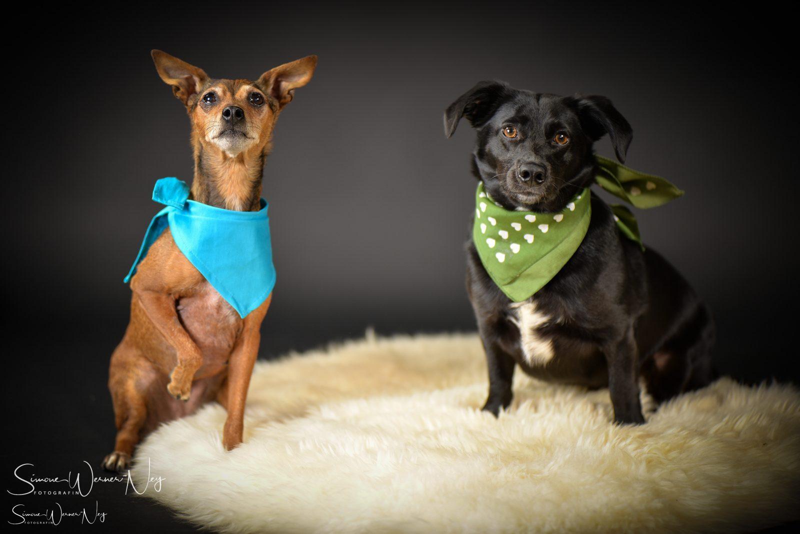 Hundefotografie  Haustiere
