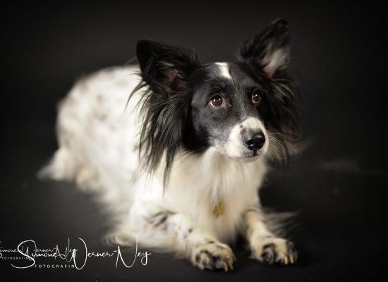 hundefotografie008