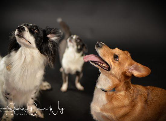 hundefotografie012