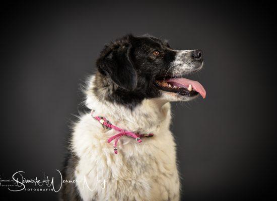 hundefotografie013