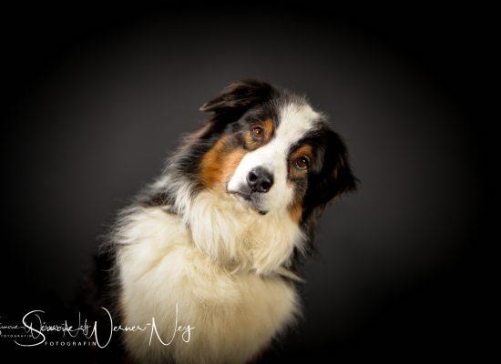 hundefotografie014