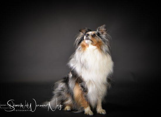 hundefotografie016