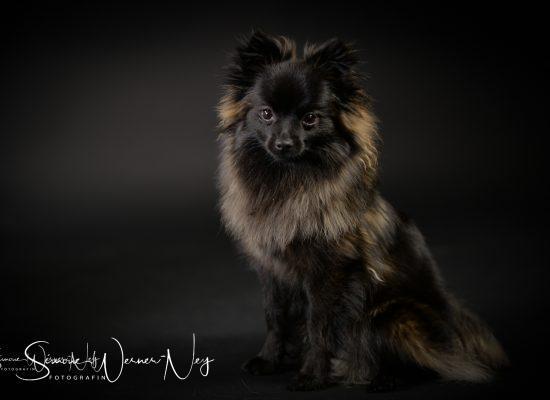 hundefotografie017