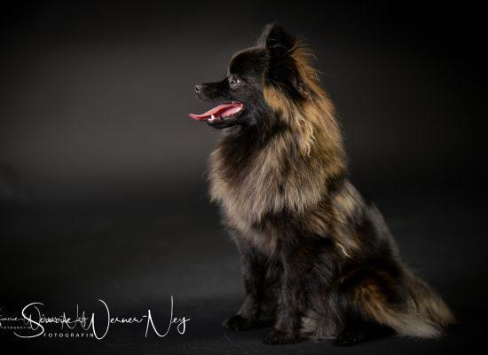 hundefotografie018