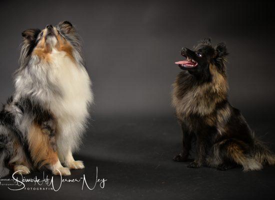 hundefotografie020