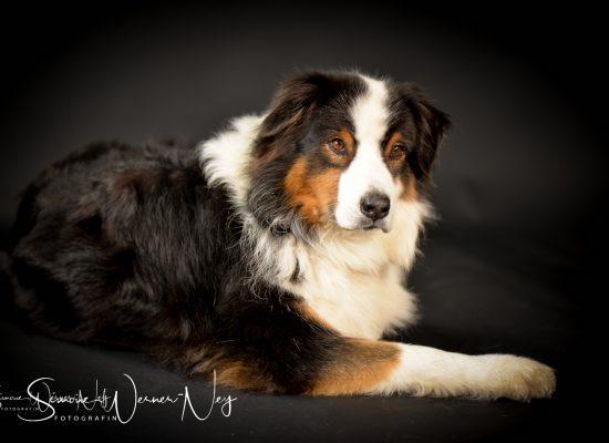 hundefotografie023