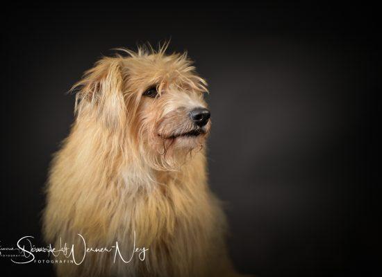 hundefotografie026